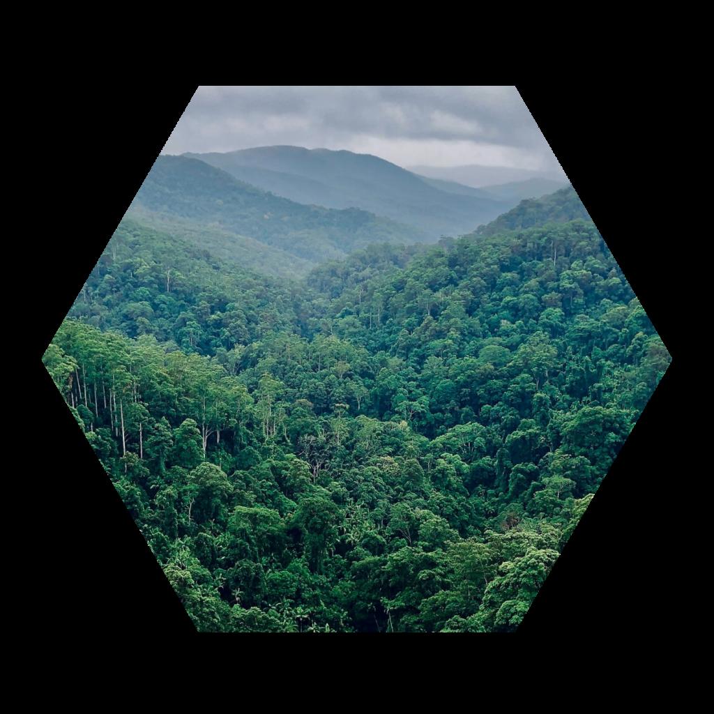 Impact Investment Klimaschutz