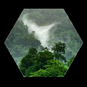 Ein intakter Regenwald ist wichtig für das Klima